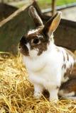 Cute bunny. Royalty Free Stock Photography