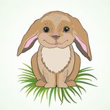 Cute bunny with big ears Stock Photography