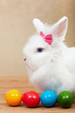 Cute bunny with colorful easter eggs Royalty Free Stock Photos