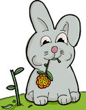 Cute Bunny Eating. Cute bunny munching on a sunflower with torn stem Stock Photos