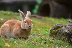 Portrait of the cute bunny in Vienna zoo. Cute bunny eating green grass in Vienna zoo, Austria, October 2017 royalty free stock photo