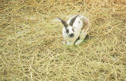 Bunny in the farm. Cute bunny in the farm Royalty Free Stock Photo