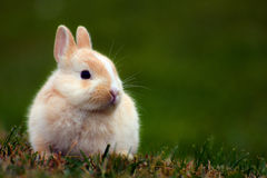 Cute bunny in grass. Little cute bunny is sitting in the grass Royalty Free Stock Image