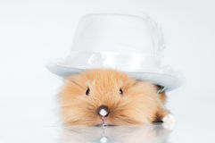 Cute bunny in a hat Stock Photography