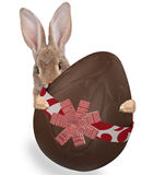 Cute bunny have a large easter egg chocolate between the legs Stock Images