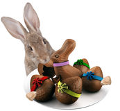 Cute Bunny have plate with easter eggs between the legs Stock Image