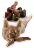 Cute Bunny have plate with easter eggs between the legs Stock Photo