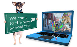 Cute bunny have shoppinng for start back tot school with chihuahua dog Stock Images