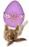 Cute bunny holidng a large easter egg between the legs Royalty Free Stock Photography