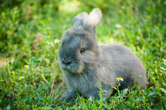 Cute  bunny Stock Image