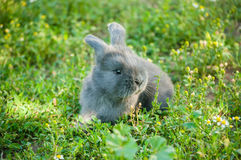 Cute  bunny Royalty Free Stock Photos