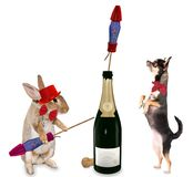 Cute bunny play with fireworks rockets for party with cute chihuahua dog. Isolated Royalty Free Stock Image