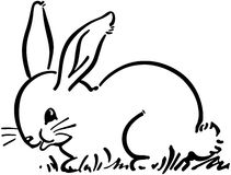 Cute Bunny Rabbit Stock Photo
