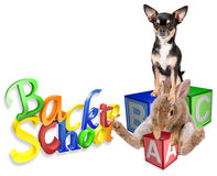Cute bunny rabbit go back to school with dog Stock Image