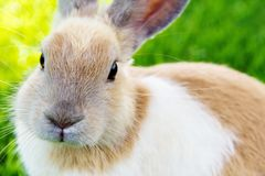 Cute bunny rabbit  on the grass Stock Image