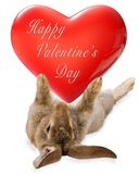 Cute bunny rabbit have a big valentine heart between legs Royalty Free Stock Photos