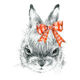 Cute Bunny. Rabbit pencil sketch illustration. T-shirt print with cute Bunny. Stock Image