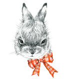 Cute Bunny. Rabbit pencil sketch illustration. T-shirt print with cute Bunny. Royalty Free Stock Photography
