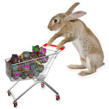Cute bunny rabbit search easter eggs Royalty Free Stock Photos