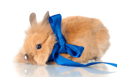Cute bunny with a ribbon royalty free stock photography