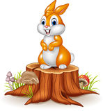 Cute bunny standing on tree stump Royalty Free Stock Photography
