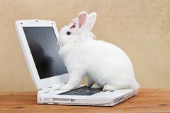 Cute bunny studies computer technology Stock Photo