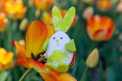 Cute bunny toy hidding among orange tulips. Stock Image