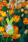Cute bunny toy hidding among orange tulips. Stock Photo