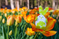 Cute bunny toy hidding among orange tulips. Stock Image