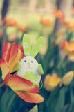 Cute bunny toy hidding among orange tulips. Royalty Free Stock Photography