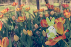 Cute bunny toy hidding among orange tulips. Royalty Free Stock Images