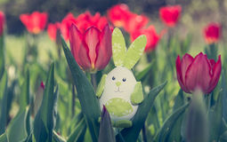 Cute bunny toy hidding among red tulips. Royalty Free Stock Photo