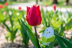 Cute bunny toy hidding among tulips. Royalty Free Stock Photography