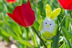 Cute bunny toy hidding among tulips. Stock Image