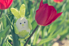 Cute bunny toy hidding among tulips. Royalty Free Stock Image