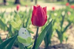 Cute bunny toy hidding among tulips. Stock Photo