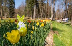 Cute bunny toy hidding among yellow tulips. Royalty Free Stock Photography