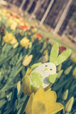 Cute bunny toy hidding among yellow tulips. Stock Photography