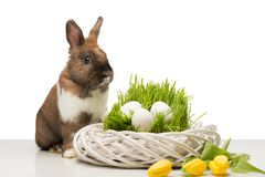 Cute bunny with wicker box and eggs Royalty Free Stock Photography