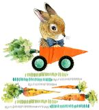 Cute bunny. wild rabbit. watercolor carrot illustration. royalty free illustration