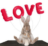 Cute bunny wish a happy valentine day Royalty Free Stock Images