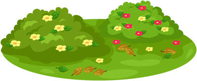 Cute bush on garden. Illustration of isolated cute bush on garden Royalty Free Stock Photos