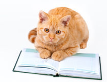 Cute business cat reading notebook Stock Photography