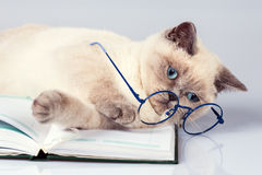 Cute business cat wearing glasses Royalty Free Stock Images