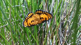 Cute butterfly royalty free stock photography