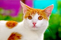 Cute caat look shocked. Surprised and skeptical about what it see Royalty Free Stock Photos