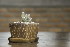 Cute cactus pot . small cactus on wooden table in house. Stock Photo