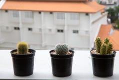 Cute cactus pots on balcony. Stock Photo