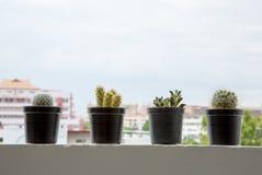 Cute cactus pots on balcony. Stock Photos