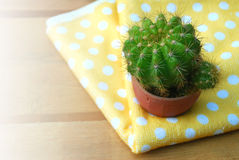 Cute cactus Stock Photos